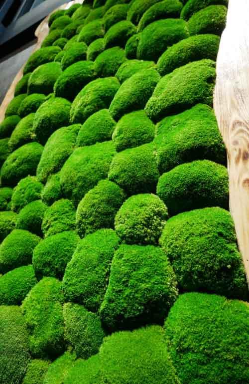 Palla di schiuma vegetale da parete Prestige da 490 Euros / M2