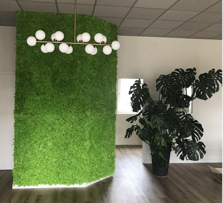 シャトードファヴェルジュで植生地衣植物壁